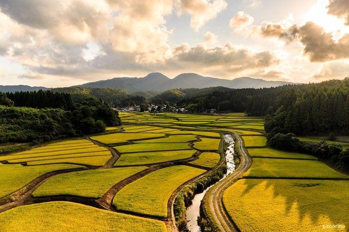 江戸時代の日本でよくあった子供を協同で育てるとはどういうことか